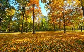 Картинка осень, листья, деревья, парк
