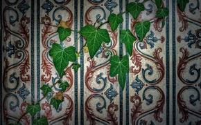 Картинка листья, стена, обои