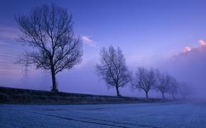 Картинка поле, небо, снег, деревья, туман, опора