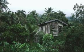 Картинка пальмы, хижина, деревья, развалины, дом, джунгли, тропики, лес