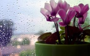 Картинка flower, rain, macro, drops