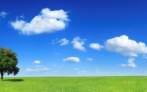 Обои дерево, 153, горизонт, поле, облака