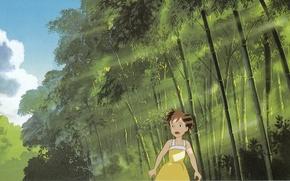 Картинка лето, свет, листва, бамбук, лучи солнца, мой сосед тоторо, поиски, tonari no totoro, satsuki kusakabe, …