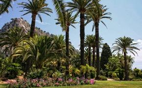 Обои трава, цветы, парк, пальмы, Франция, лужайка, Menton