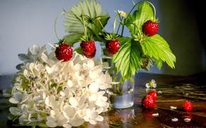 Картинка цветы, ягоды, фон