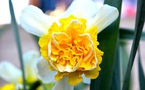 Картинка цветок, желтый, green, flower, yellow, bright