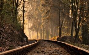 Обои осень, лес, свет, железная дорога