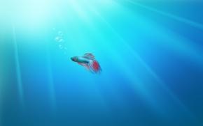Картинка Fish, Desktop, Windows