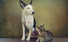 Картинка кошка, кот, ретро, собака, обработка, пара, пёс, сидят, друганы