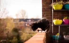 Обои черно-белый, балкон, горшки, кот