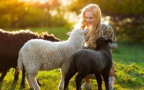 Картинка лето, девушка, солнце, овечки