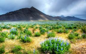 Картинка поле, пейзаж, цветы, горы, природа