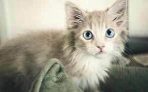 Картинка кошка, серый, голубой