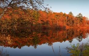 Картинка осень, лес, небо, листья, деревья, река, вечер, багрянец