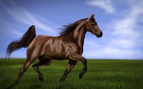Картинка грива, арт, трава, живопись, скачет, хвост, тень, небо, зеленая, лошадь
