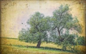 Картинка деревья, природа, стиль, текстура