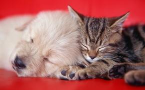 Картинка котенок, диван, щенок