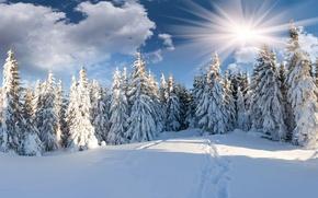 Картинка зима, лес, солнце, облака, снег, ёлки, тропинка