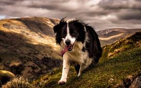 Картинка горы, друг, собака