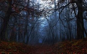 Обои графика, digital, лучи, Elegy, осень, лес, листья