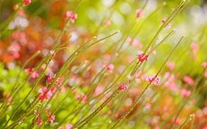Картинка поле, лето, цветы, блики, размытость, розовые