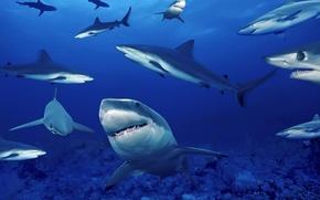 Картинка море, глубина, акулы