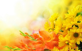Картинка цветы, букет, хризантемы, flowers, bouquet, гладиолусы, chrysanthemums, gladioli