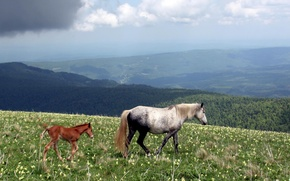 Картинка природа, хвост, Лошади, horses, копыта, жеребенок