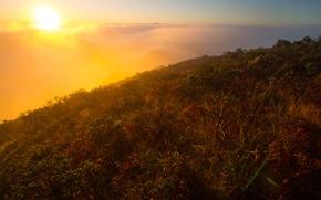 Картинка солнце, пейзаж, туман, растения, кусты, возвышенность
