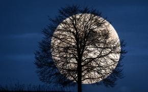 Картинка небо, ночь, луна