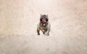 Картинка взгляд, собака, бег