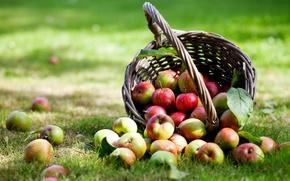 Картинка корзина, яблоки, травка, листики
