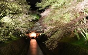 Картинка деревья, ночь, сакура, подсветка, канал, цветущие