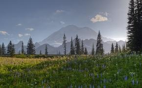 Картинка лес, пейзаж, цветы, горы, природа, поляна