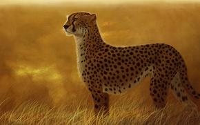 Картинка кошка, трава, хищник, арт, гепард, саванна, дикая