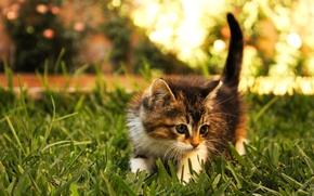 Обои иследователь, котенок, трава