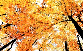 Картинка осень, листья, деревья, ветки, краски