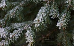 Картинка white, christmas, forest, trees, winter, snow, macro, laneynest