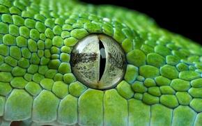 Картинка глаз, зелёный, питон