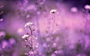 Картинка поле, макро, Цветы, размытость, сиреневые, боке