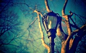 Картинка небо, макро, ветки, дерево, улица, голубое, размытость, фонарь, ствол
