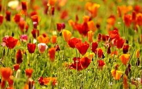 Обои цветы, цветочки, цветочек, цветки
