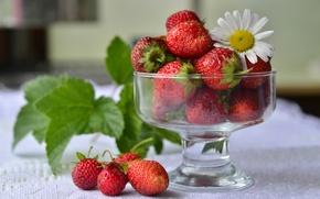 Обои красный, ягоды, ромашка, клубника, вазочка