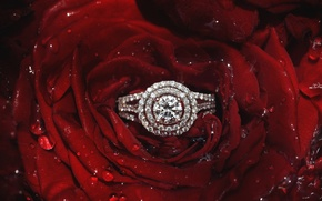 Картинка роза, лепестки, кольцо, бриллианты