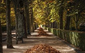 Картинка осень, листья, город, улица