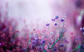Обои боке, макро, природа, розовые, Цветы, сиреневые, полевые