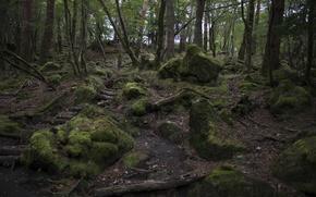 Картинка зелень, лес, деревья, камни