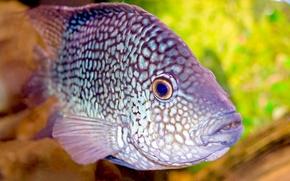 Картинка обои, аквариум, рыбка