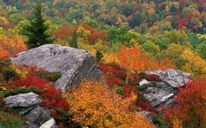 Обои камень, небо, осень, деревья, природа