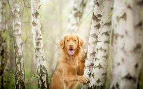 Картинка взгляд, деревья, друг, собака